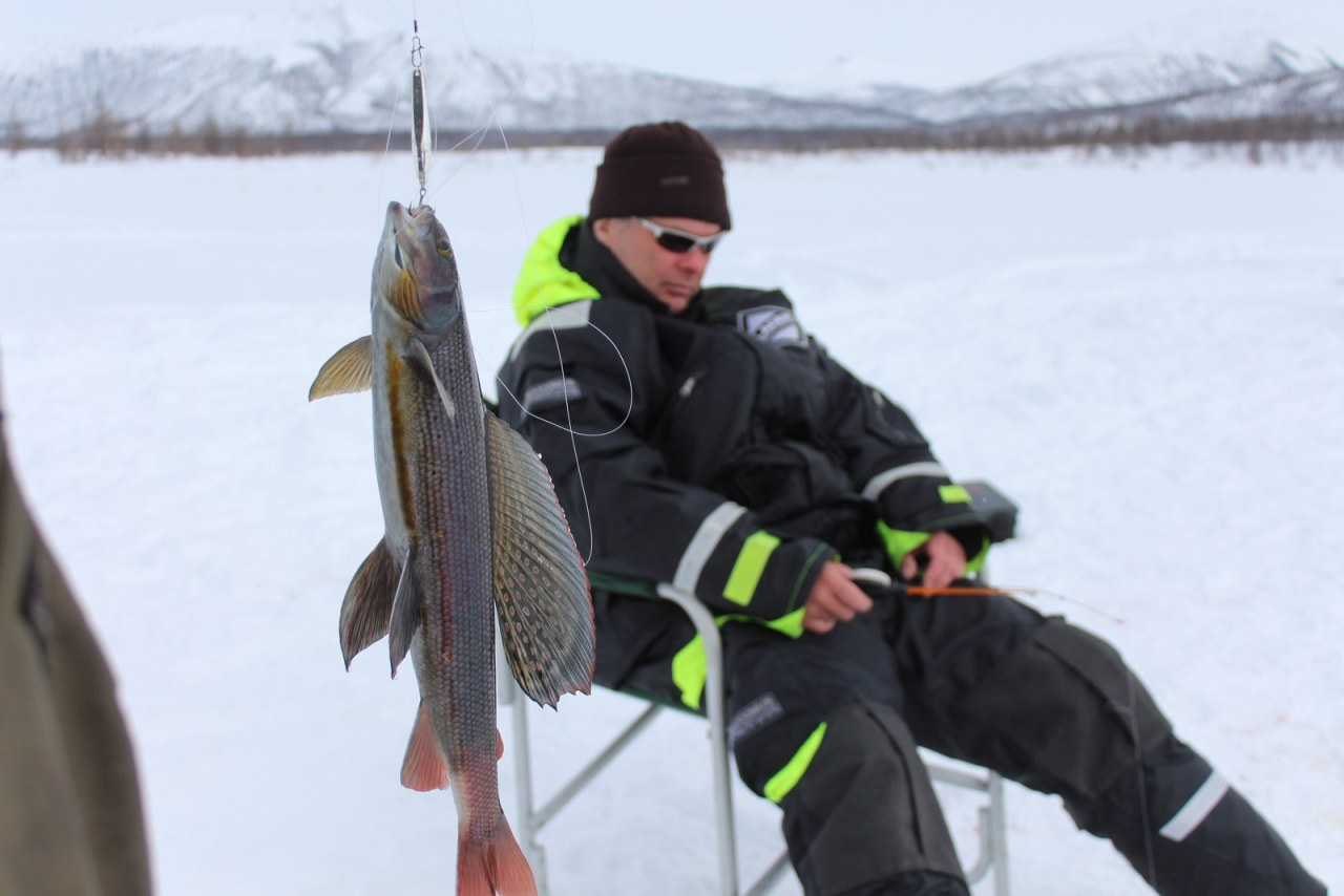 fishing-siberia-discovery-salvelinus-alpinus-rybalka-arkticheskiy-golec-1
