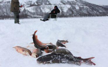 fishing-siberia-discovery-salvelinus-alpinus-rybalka-arkticheskiy-golec-2